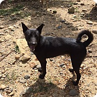 Adopt A Pet :: Zlatan - Denver, CO