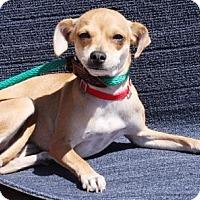 Adopt A Pet :: Jodi - Gilbert, AZ