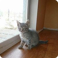Adopt A Pet :: Waldo - Lancaster, CA
