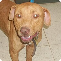 Adopt A Pet :: Major (Lonely Heart) - Gulfport, MS