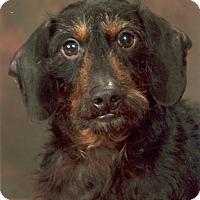 Adopt A Pet :: FUZZY - Portland, OR