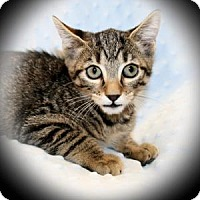 Adopt A Pet :: Chili - Bradenton, FL