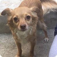 Adopt A Pet :: Molly - Bucks County, PA