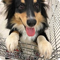 Adopt A Pet :: Lil Man - Enid, OK