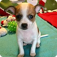 Adopt A Pet :: Mitzi (BH) - Santa Ana, CA
