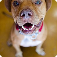 Adopt A Pet :: Leroy - Von Ormy, TX