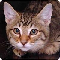 Adopt A Pet :: Boggie - Los Alamitos, CA