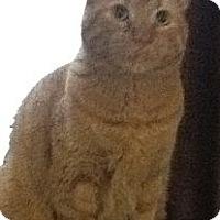 Adopt A Pet :: *Tiger - Winder, GA