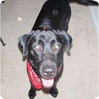 Adopt A Pet :: Isabella - Altmonte Springs, FL