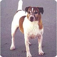 Adopt A Pet :: OAKEY DOKEY - Phoenix, AZ