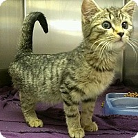 Adopt A Pet :: Selena Gomez - Richboro, PA