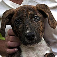 Adopt A Pet :: Doogie ADOPTED!! - Antioch, IL
