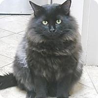 Adopt A Pet :: Pluto - Colorado Springs, CO