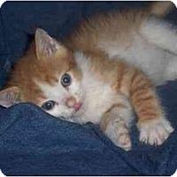 Adopt A Pet :: Murray - Irvine, CA