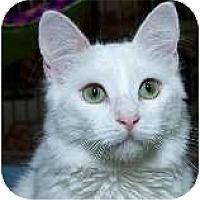 Adopt A Pet :: Pollo - Sacramento, CA