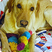 Adopt A Pet :: Sundance - Knoxville, TN