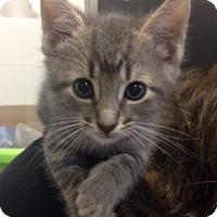 Adopt A Pet :: Oliver - Long Beach, NY