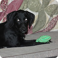 Adopt A Pet :: Kate - PENDING - kennebunkport, ME