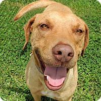 Adopt A Pet :: Lenny - Humble, TX