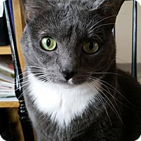Adopt A Pet :: Layla - Philadelphia, PA