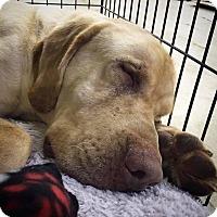 Adopt A Pet :: Remi - Florence, KY