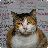 Adopt A Pet :: Stacy - Baton Rouge, LA