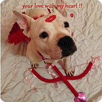 Adopt A Pet :: Sally - Alpharetta, GA