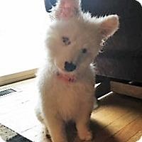 Adopt A Pet :: Kody - Schaumburg, IL