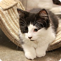 Adopt A Pet :: Alfie - New Richmond,, WI