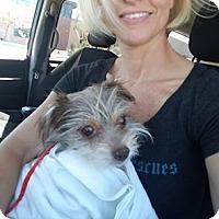 Adopt A Pet :: Pixy - Las Vegas, NV