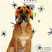 Adopt A Pet :: Cora - Covington, LA