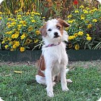 Adopt A Pet :: FANCY - Hartford, CT