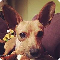 Adopt A Pet :: Tucker - Riverview, FL