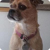 Adopt A Pet :: Roxi - Gilbert, AZ