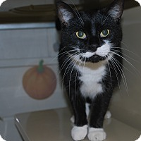 Adopt A Pet :: Little T - New Castle, PA