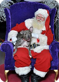 Pit Bull Terrier Dog for adoption in Akron, Ohio - Mary