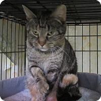 Adopt A Pet :: Laura - Jackson, MO