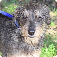 Adopt A Pet :: WESLEY - Jacksonville, FL