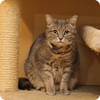 Adopt A Pet :: Chubbs - Newtown, CT