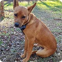 Adopt A Pet :: Belvedere - Peace Dale, RI