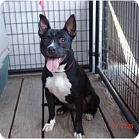Adopt A Pet :: Lady - West Los Angeles, CA