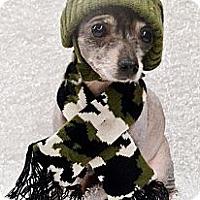 Adopt A Pet :: Jackson - Bridgeton, MO