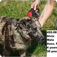 Adopt A Pet :: Alvin - RESCUED! - Zanesville, OH