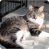 Adopt A Pet :: Gilbert - Palmdale, CA