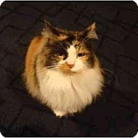 Adopt A Pet :: Carla--PETSMART - Muncie, IN