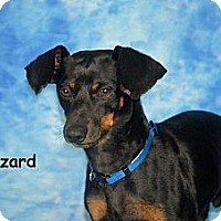 Adopt A Pet :: Wizard - Ft. Myers, FL