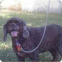 Adopt A Pet :: Feona Rose - Tacoma, WA