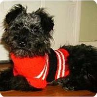 Adopt A Pet :: Scamp - Mooy, AL
