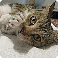 Adopt A Pet :: Ginny - Vero Beach, FL