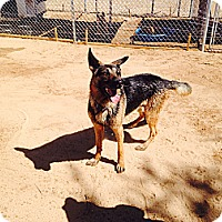 Adopt A Pet :: Pacer - Victorville, CA